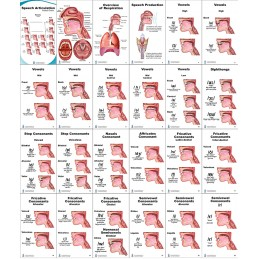 Speech Articulation Pocket Charts layout