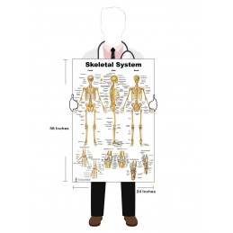 Skeletal System Large Poster in hand