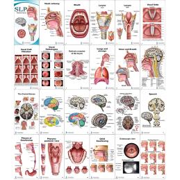 SLP Pocket Chart layout