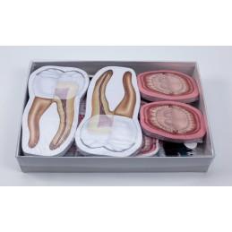 Dentist Gift Box 02