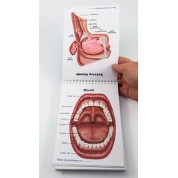 Swallowing Flip Chart