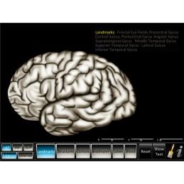 Brain 2 Computer App Set - Cerebrum ID