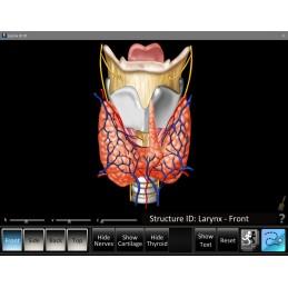 ENT Seven Computer Software App Set - Larynx ID