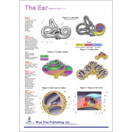 Hearing Computer Software and Chart Set - Ear Anatomical Chart back