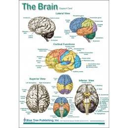 SLP Computer Software and Chart Set - Brain Anatomical Chart card one front