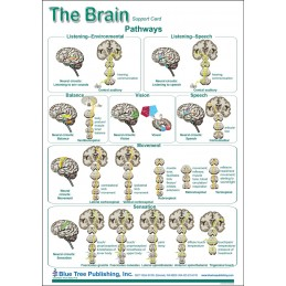 SLP Computer Software and Chart Set - Brain Anatomical Chart card two front