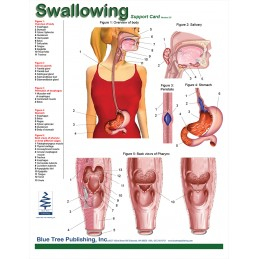 SLP Computer Software and Chart Set - Swallowing Anatomical Chart front