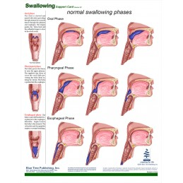 Swallowing Anatomical Chart back