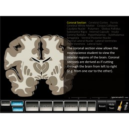 Brain Computer App Chart Tablet Set - Cerebrum ID