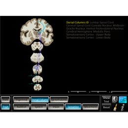 Brain Computer App Chart Tablet Set - Pathway Tracts ID