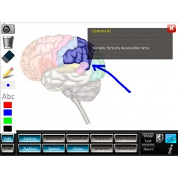 Brain Computer App Chart Tablet Set - drawing whiteboard feature