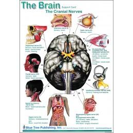 Brain Computer App Chart Tablet Set Brain Anatomical Chart - card two back