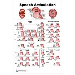 Speech Articulation Medium Poster