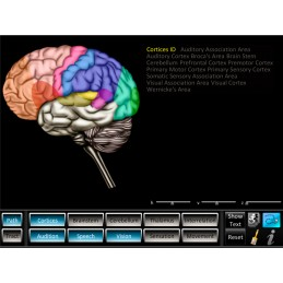 Brain Computer App Flip Charts Tablet Set - Pathway Tracts ID