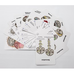 Brain Pocket Chart back