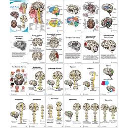 Brain Pocket Chart layout