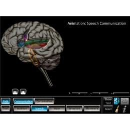 Brain Computer App Head Model Pocket Chart Tablet Set - Pathway Tracts ID