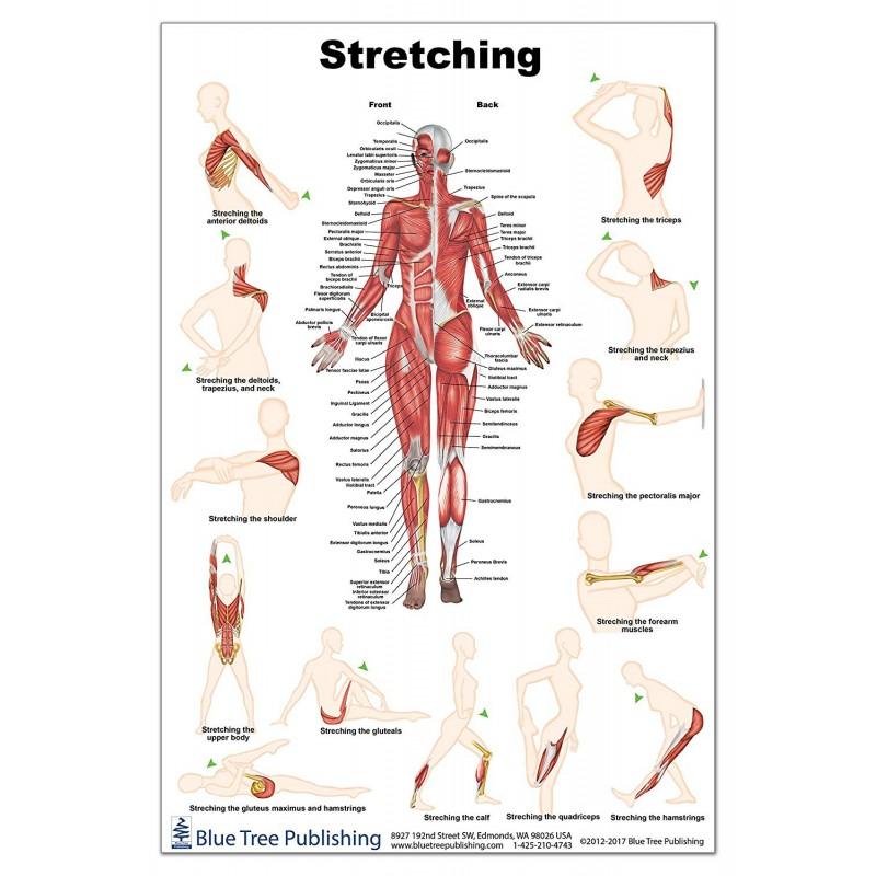Stretching Regular Poster