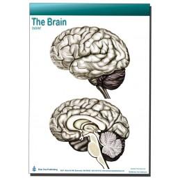 Brain Computer App Head Model Pocket Chart Tablet Set - Brain tablet