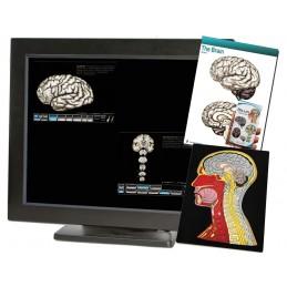 Brain Computer App Head Model Pocket Chart Tablet Set