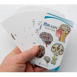 Brain Computer App Head Model Pocket Chart Tablet Set - Brain Pocket Chart