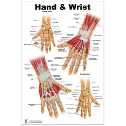Hand and Wrist Large Poster
