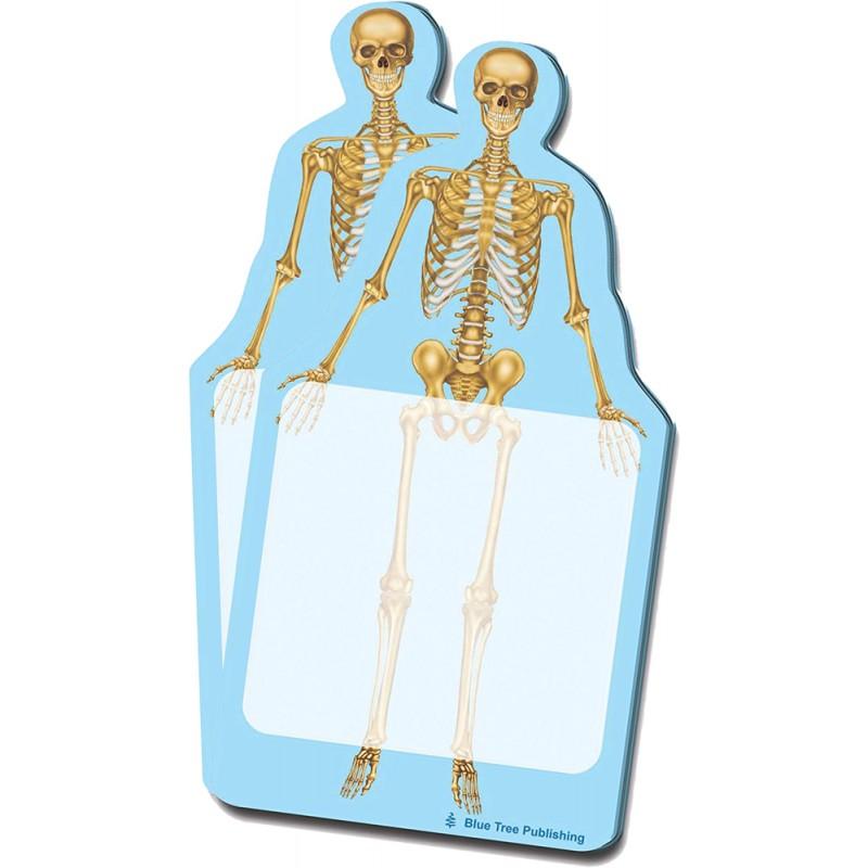 Skeleton Stick Note 2 pack