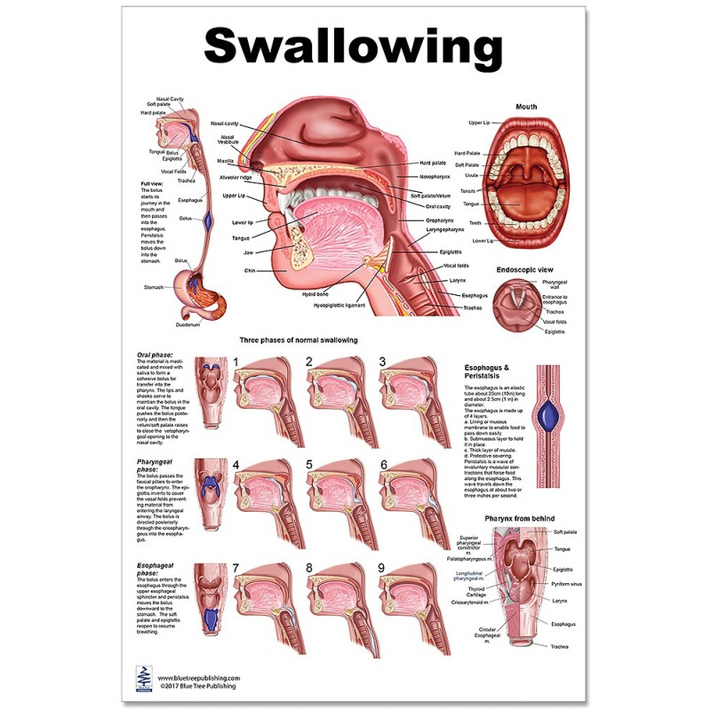 Swallowing Large Poster