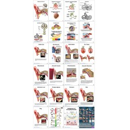Ear Anatomy Flip Charts layout