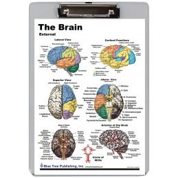 Brain Exterior Interior Dry Erase Clipboard front
