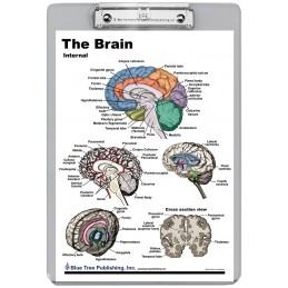Brain Exterior Interior Dry Erase Clipboard back