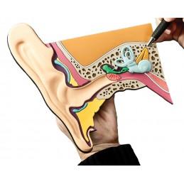 Ear Mat Model