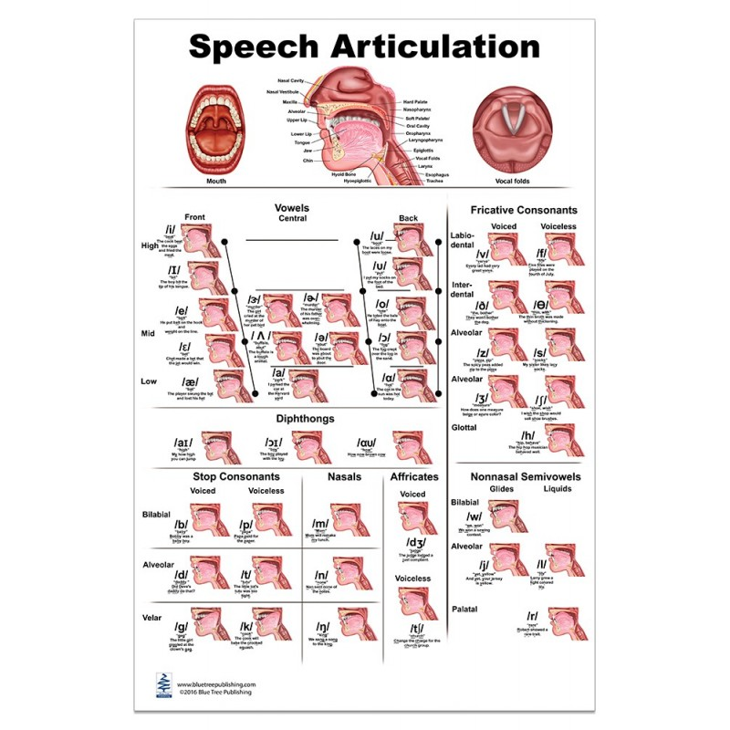 Speech Articulation Large Poster