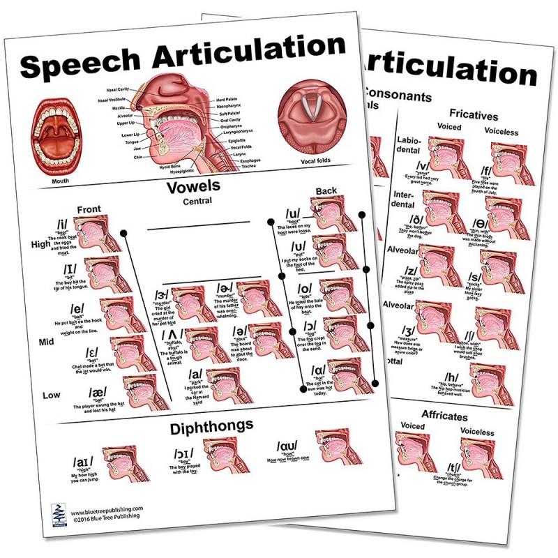 Speech Articulation Regular Poster Set