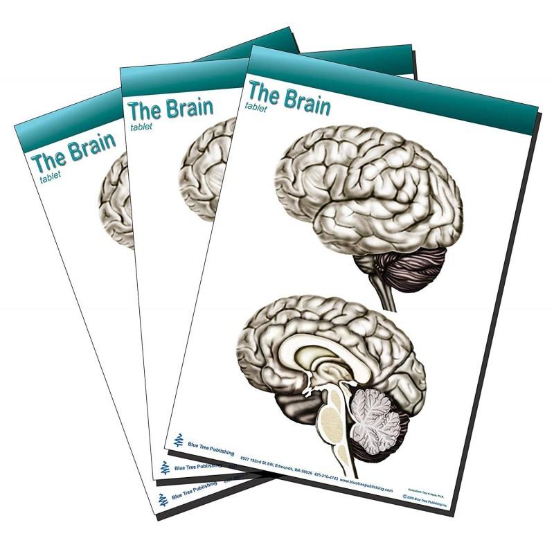 Brain Tablet 3 pack