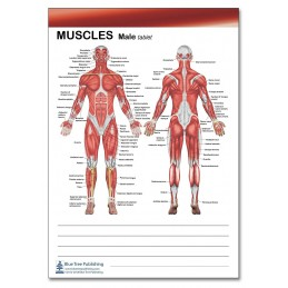 Muscle Female and Male Tablet male view
