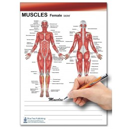 Muscle Female and Male Tablet writing