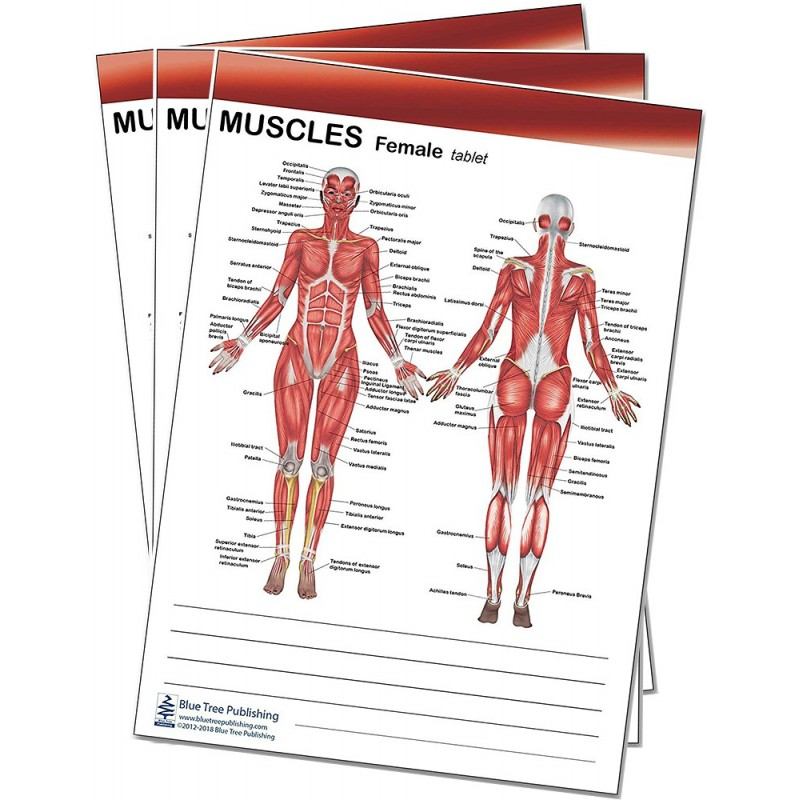 Muscle Female and Male Tablet 3 pack