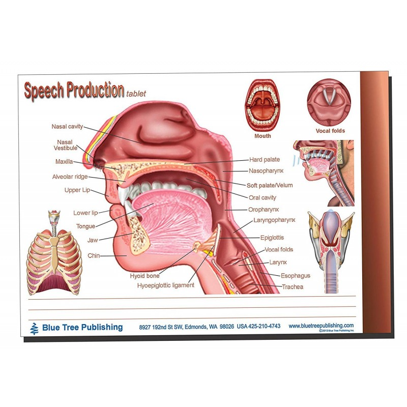 Speech Production Tablet 1 pack