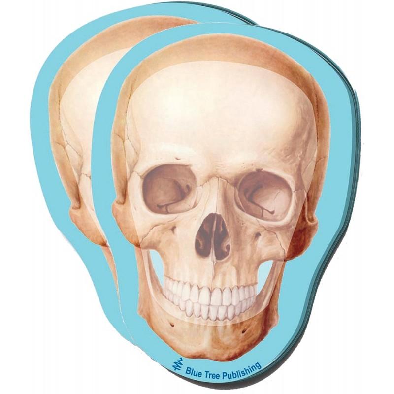 Skull Stick Note 2 pack