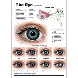 Eye Anatomical Chart back view
