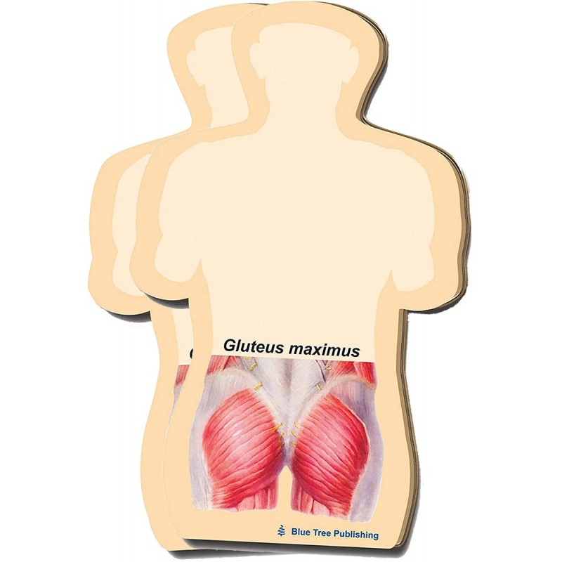 Gluteus Maximus Stick Note 2 pack