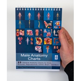 Male Anatomy Flip Charts