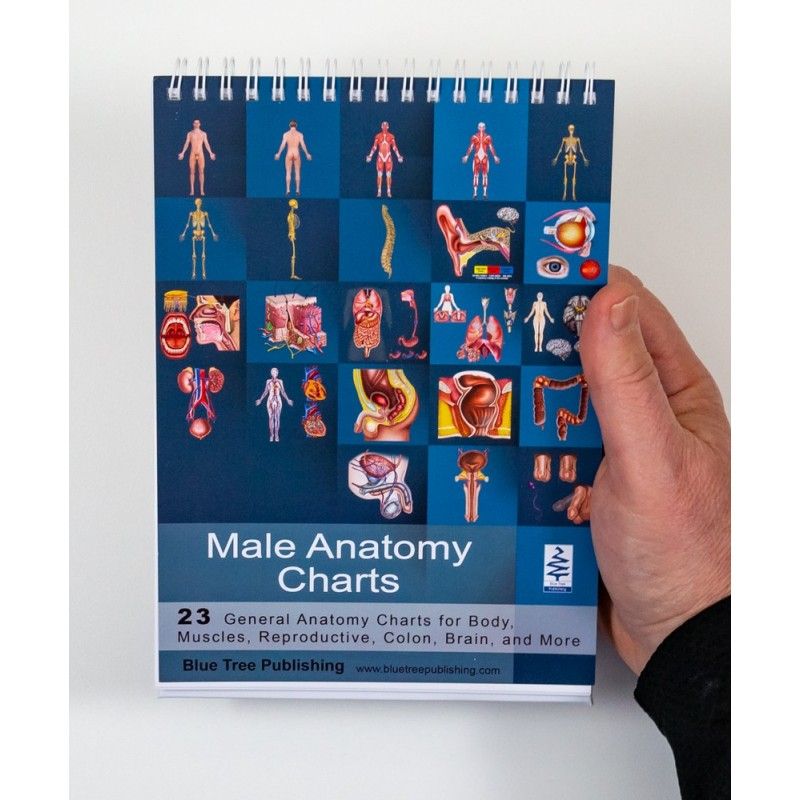 Male Anatomy Flip Chart cover view