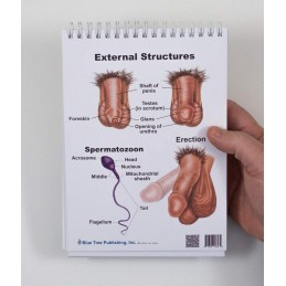 Male Anatomy Flip Chart penis and sperm views