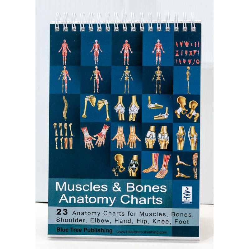 Muscles and Bones Anatomy Flip Chart cover view