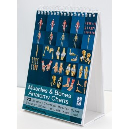 Muscles and Bones Anatomy Flip Chart standing view