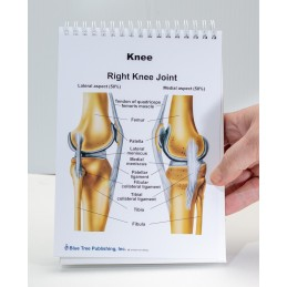 Muscles and Bones Anatomy Flip Chart knee view