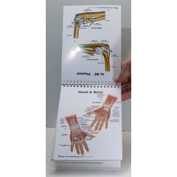Muscles and Bones Anatomy Flip Chart elbow, wrist and hand view