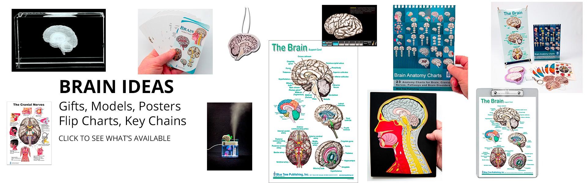 Brain Ideas